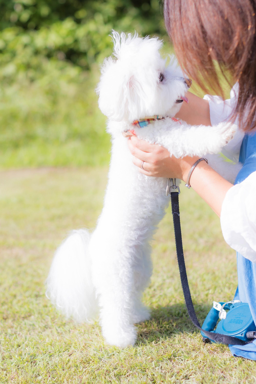 愛犬と一緒にラブラブフォト 撮影