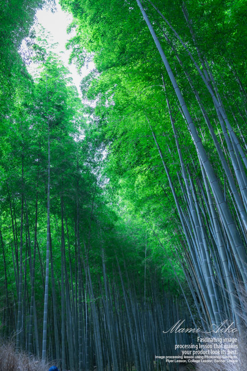 京都旅行 嵐山竹林の道